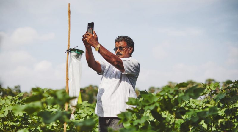 Google.org is helping deploy AI to prevent pests devastating Indian crops